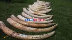 Mkulima na Dereva Kortini Meno ya Tembo ya Mil 173