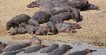 Viboko waua wavuvi 12 bwawa la mtera