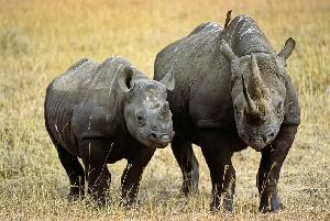 WWF kutoa Shilingi milioni 200 ujenzi wa mabwawa hifadhi ya Mkomazi