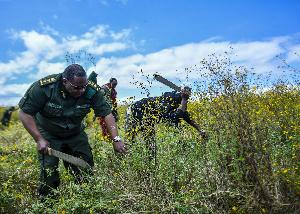 Manufaa ya kiuchumi ufyekaji mimea vamizi Hifadhi ya Ngorongoro