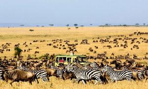 Safaro Tours To Serengeti National Park 1200x675 1 660x400