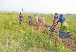 Mtaji wa 400,000/- wakifanyia makubwa kikundi cha kilimo